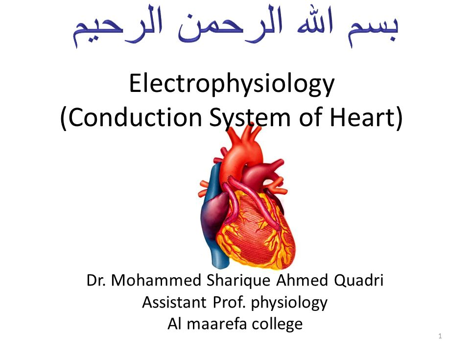 Electrophysiology Conduction System Of Heart Ppt Video Online