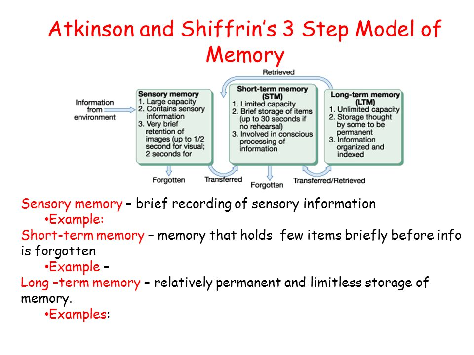 Atkinson–Shiffrin memory model