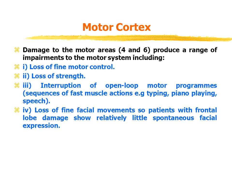 Biological bases of behaviour lecture 9 cerebral cortex for Loss of motor control