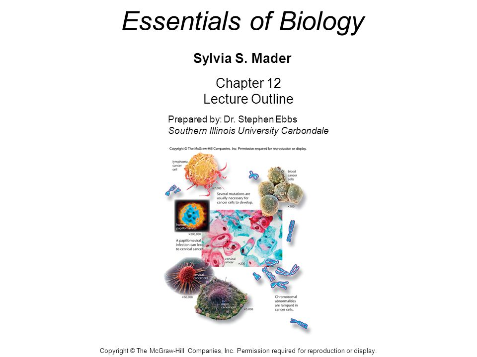 essentials of biology sylvia s mader ppt video online. Black Bedroom Furniture Sets. Home Design Ideas