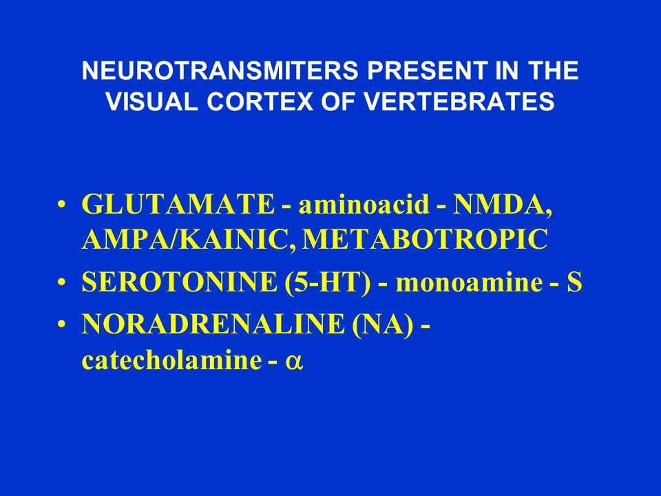 NEUROTRANSMITERS PRESENT IN THE VISUAL CORTEX OF VERTEBRATES