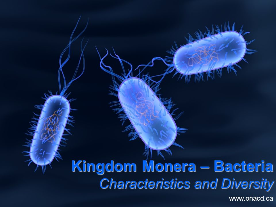 kingdom monera general characteristics Under the three-domain system of taxonomy, introduced by carl woese in 1977, which reflects the evolutionary history of life, the organisms found in kingdom monera have been divided into two domains, archaea and bacteria (with eukarya as the third domain.
