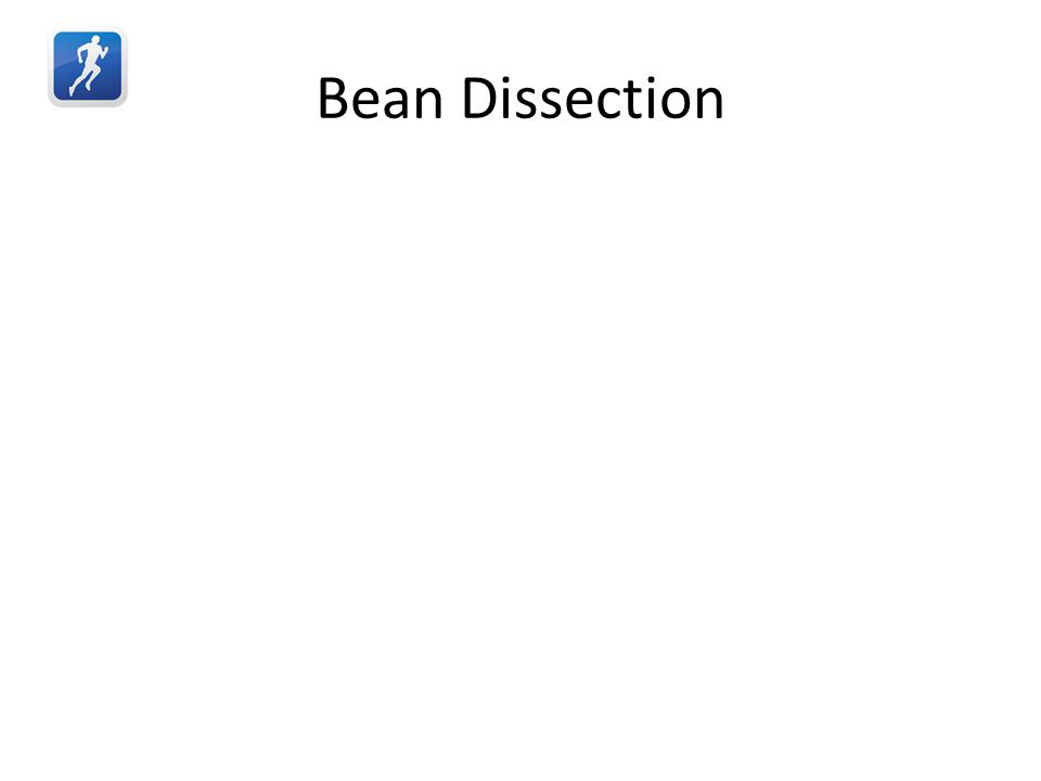 Bean Dissection