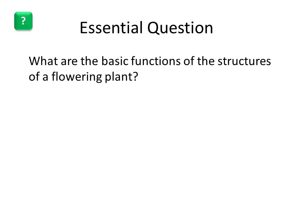 Essential Question What are the basic functions of the structures of a flowering plant