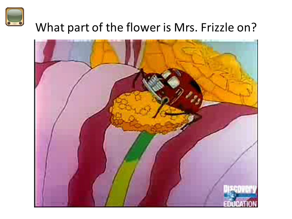 What part of the flower is Mrs. Frizzle on