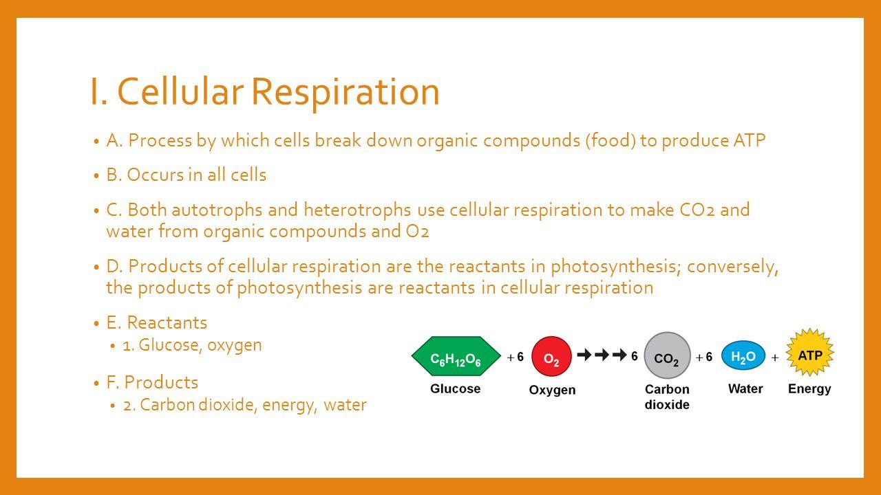 Cell respiration worksheet key