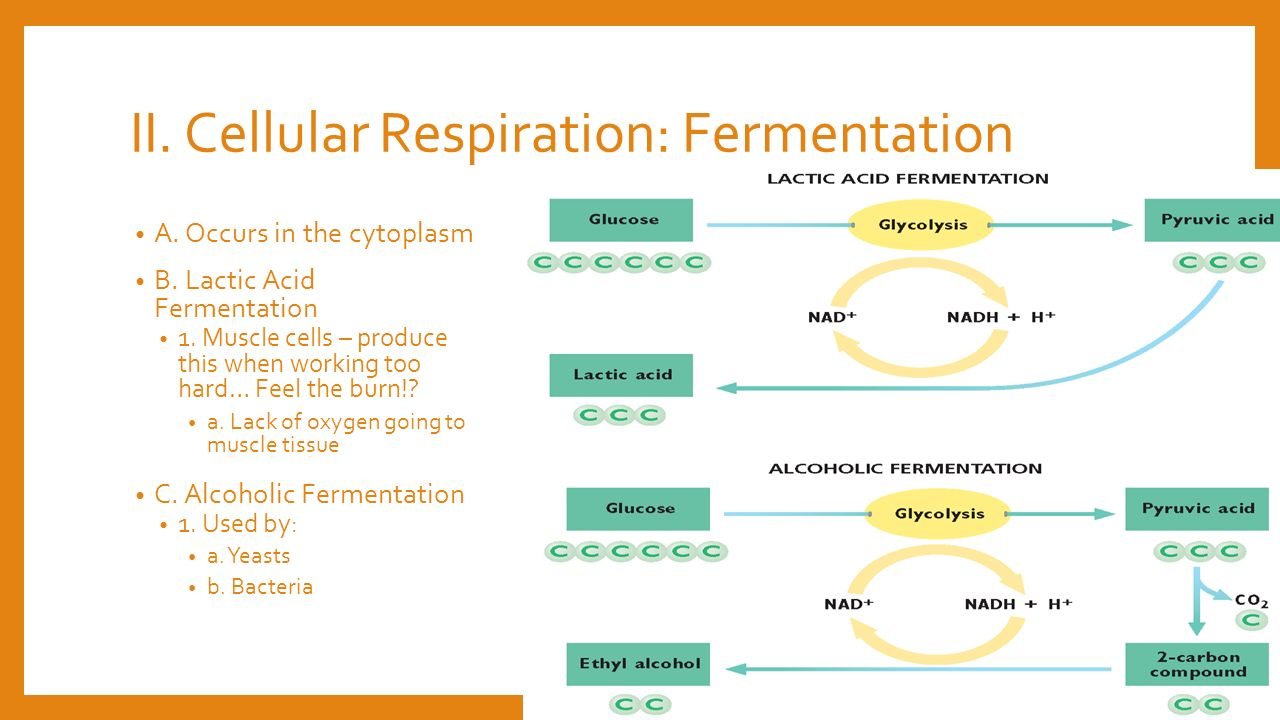 Venn diagram of respiration and fermentation vatozozdevelopment venn diagram of respiration and fermentation ccuart Image collections