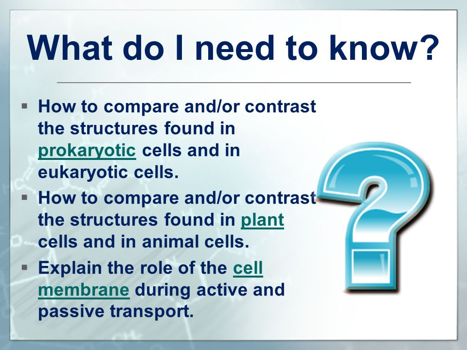 Cell Structure And Function Ppt Video Online Download