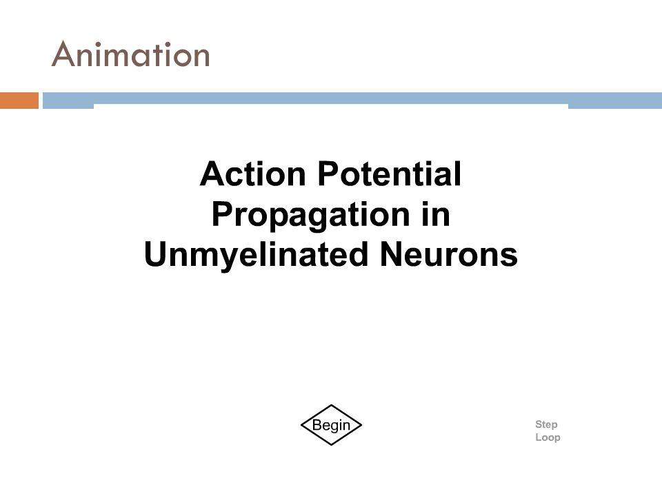 computer simulation of action potential in squid axon Computational modelling is fundamental to the scientific method  be based on  empirical data of an action potential from a giant squid  measured membrane  action potential trace for a giant squid axon at 63°c with 15mv.
