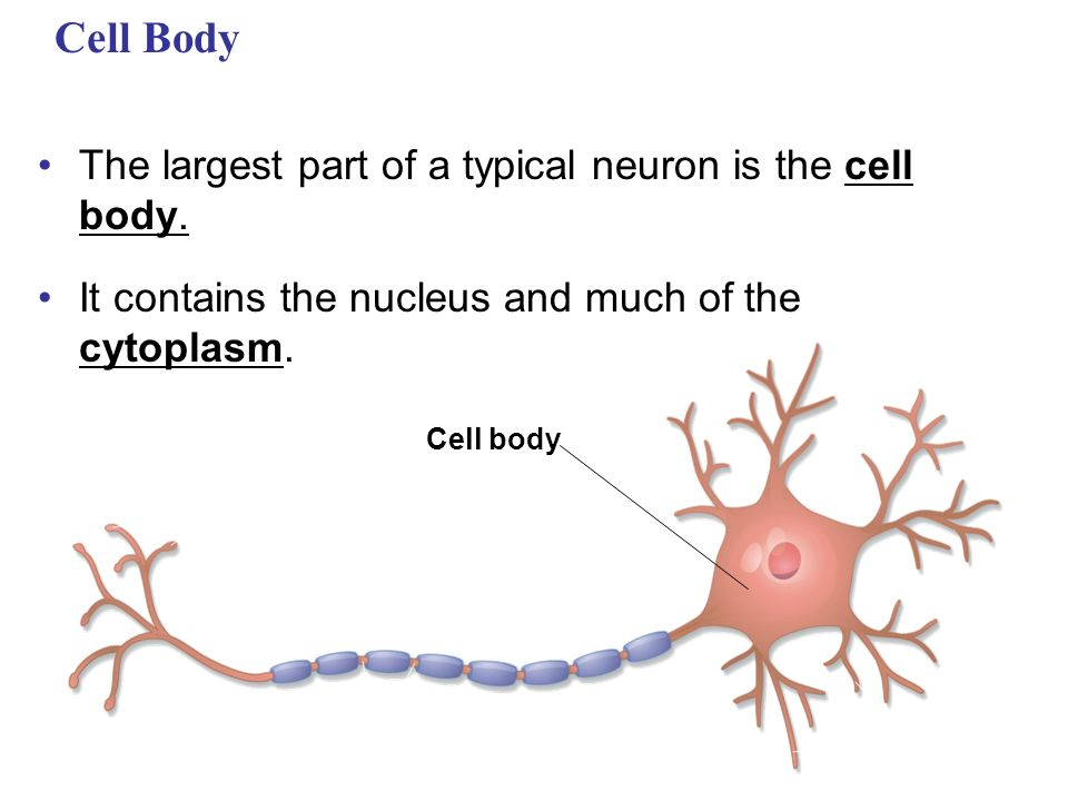 Nervous Systems Ppt Video Online Download