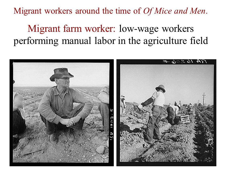 migrant workers and the american dream essay Transcript of how did the great depression affect migrant workers mexican and mexican american workers looked for work in california and other states in the 1930's.