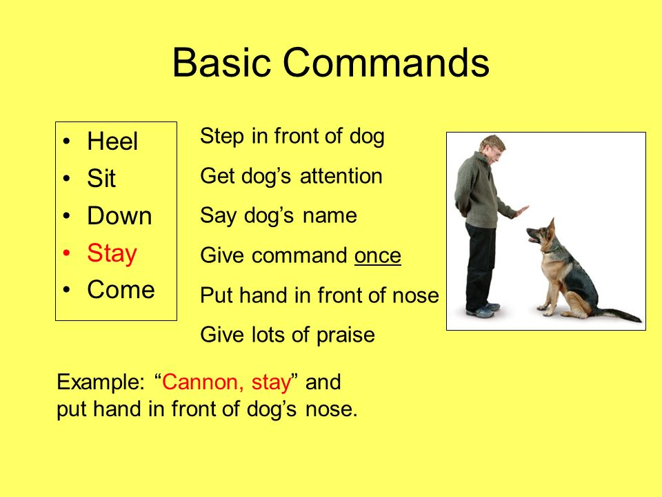 The ABCs of Dog Obedience Training