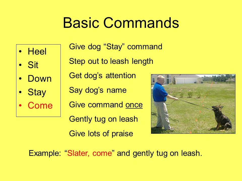 Dog Training Stay Command