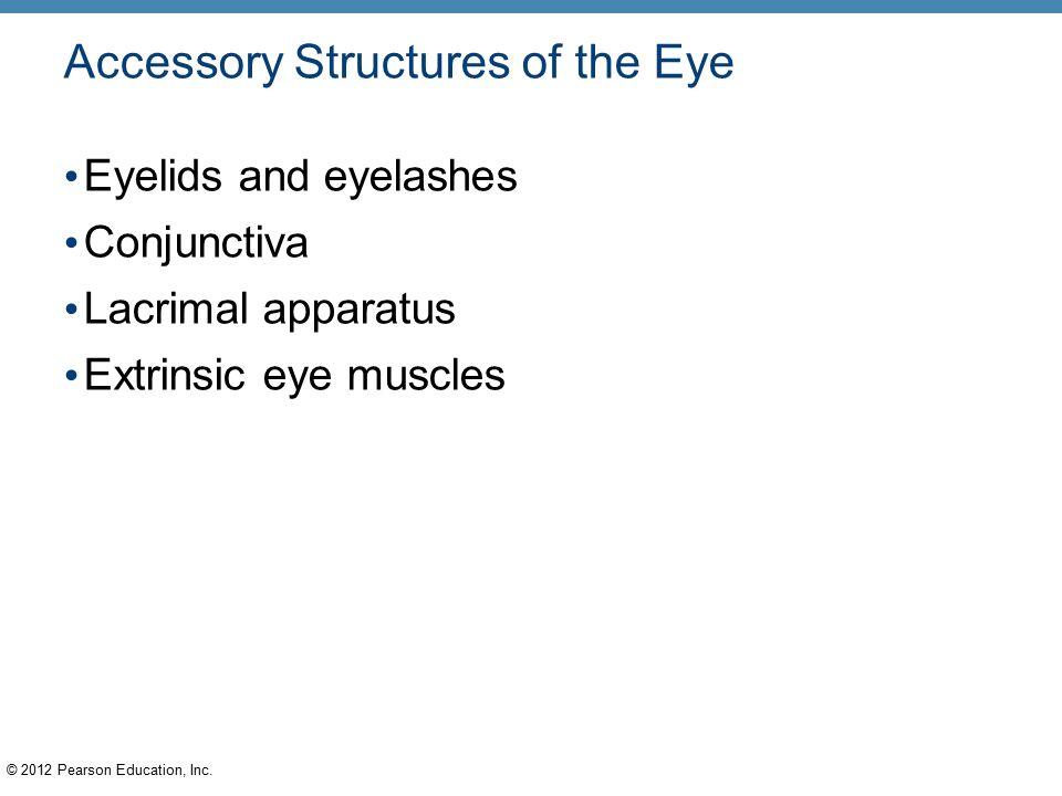 8 Special Senses PowerPoint® Lecture Slides C H A P T E R - ppt download