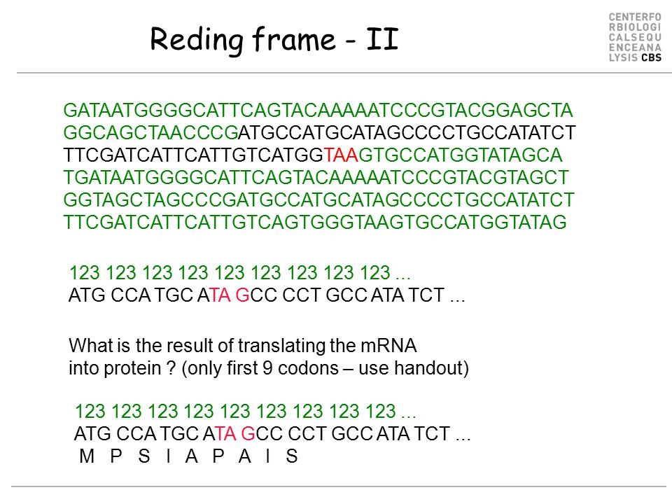 Outline What... Reverse Complement Dna