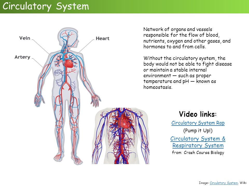 Colorful Anatomy And Physiology Links Mold - Human Anatomy Images ...