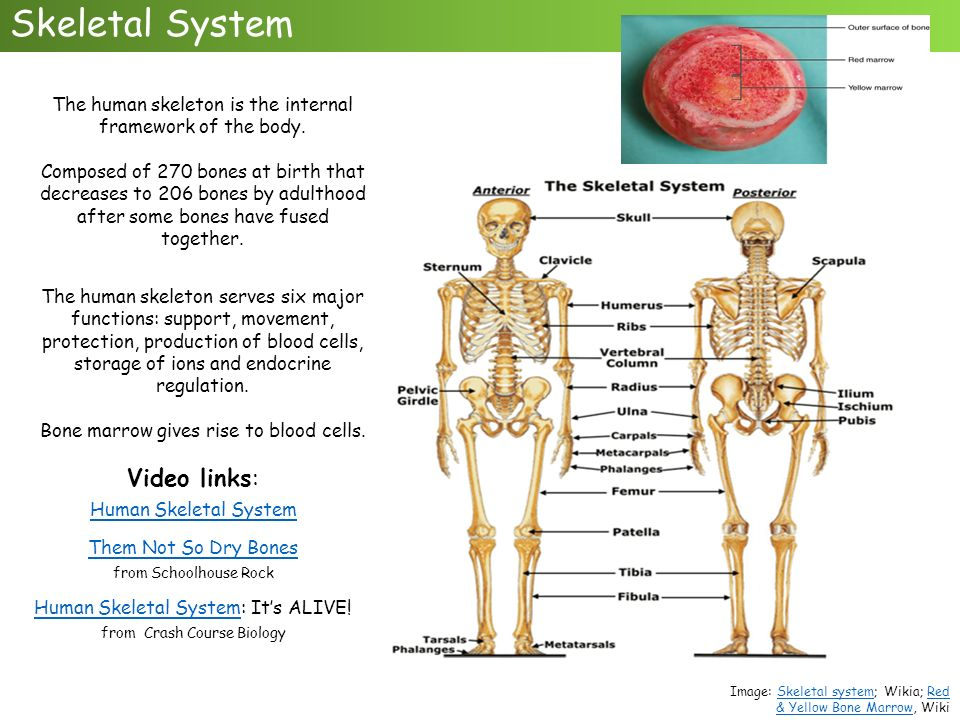 body system links Body systems & how they work together  all of the nerves and sends messages from the brain to the rest of the body the nervous system controls both voluntary and.