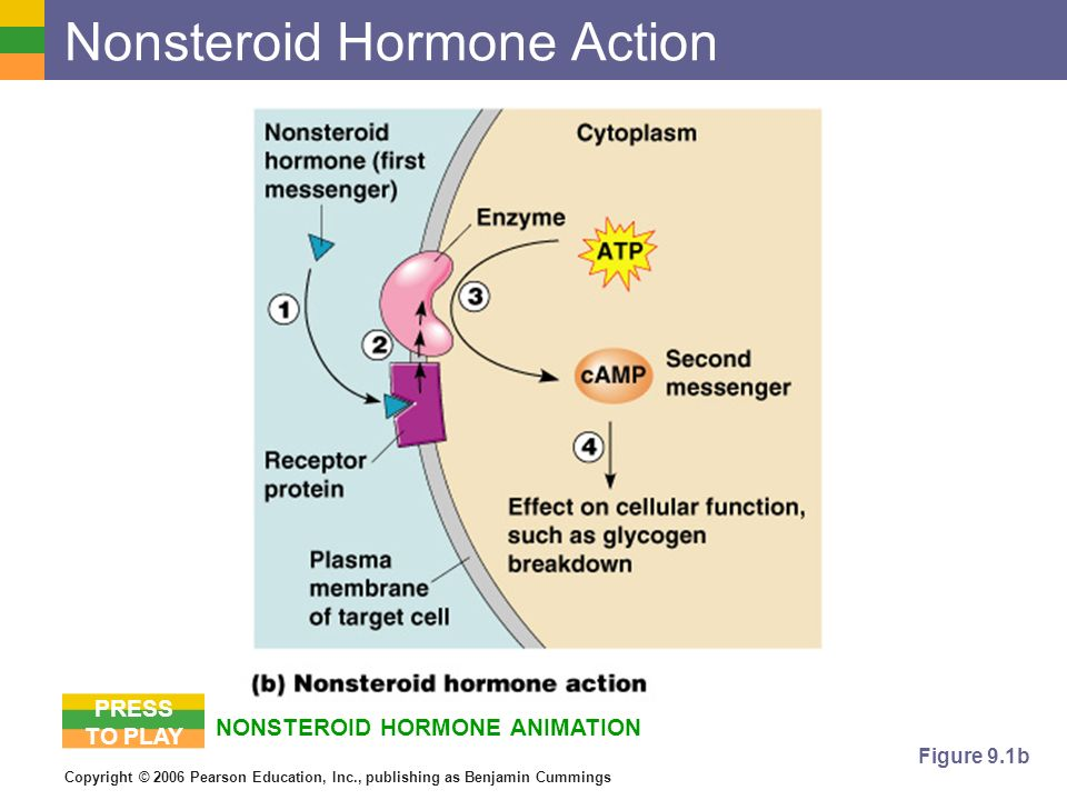 steroids negative effects on the body