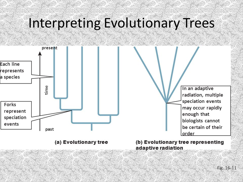 patterns of evolution Pattern of evolution in which long stable periods are interrupted by brief periods of more rapid change isolation, migration, mass extinction 3 ways rapid evolution can occur after long periods of equilibrium.