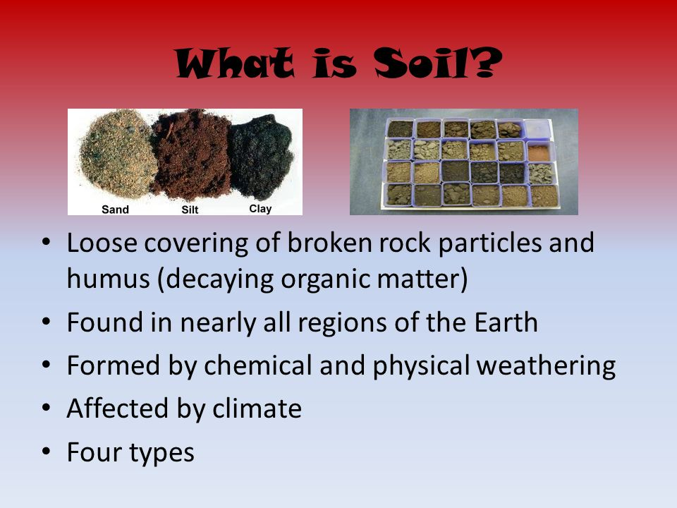 Soil formation ppt video online download for Things found in soil