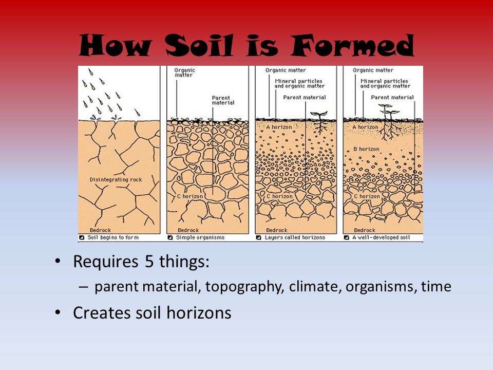 Soil formation ppt video online download for Soil 4 climate