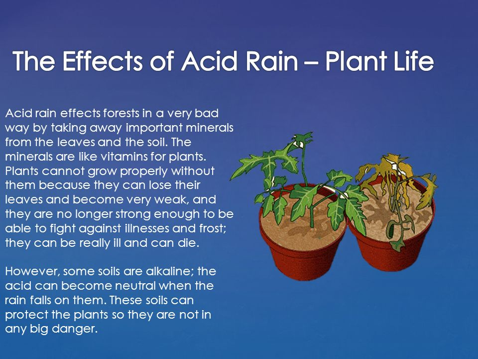 Acid Rain Effects