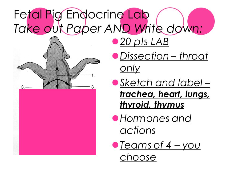 fetal pig dissection term papers