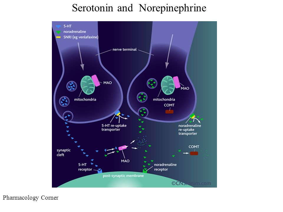synaptic cleft acetylcholine