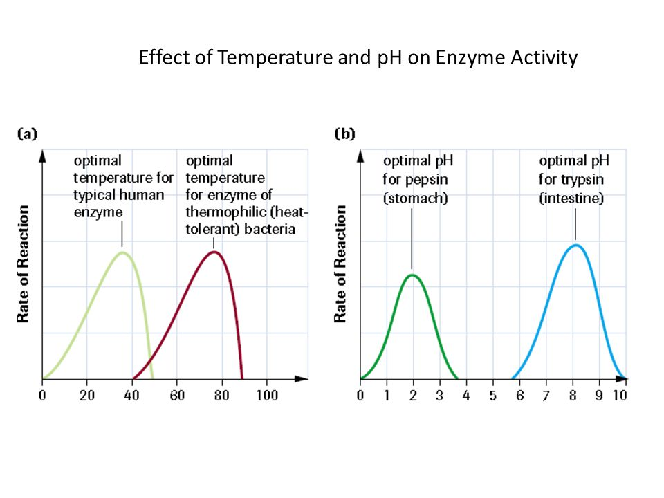 Effect on Enzyme Activity