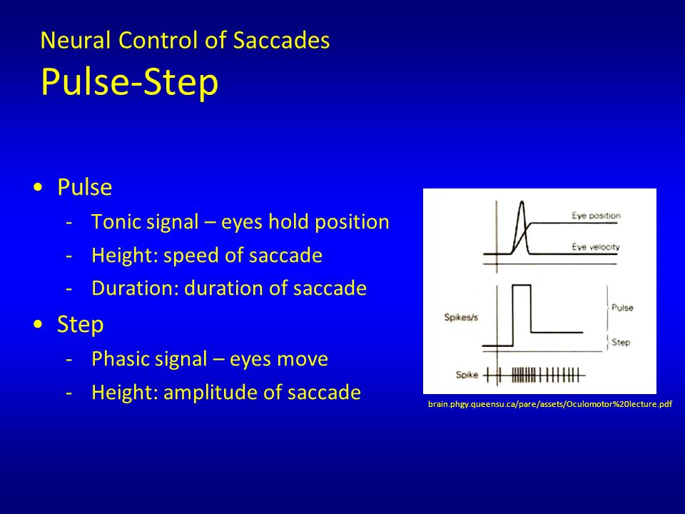 download Hazard Analysis and Critical Control Point Generic Models for Some