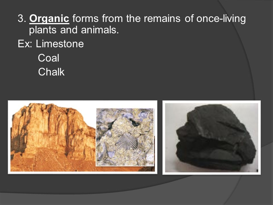 dating remains of plants and animals When an animal or plant found are the remains of organisms of pennsylvania common fossils of pennsylvania and common fossils of pennsylvania and.
