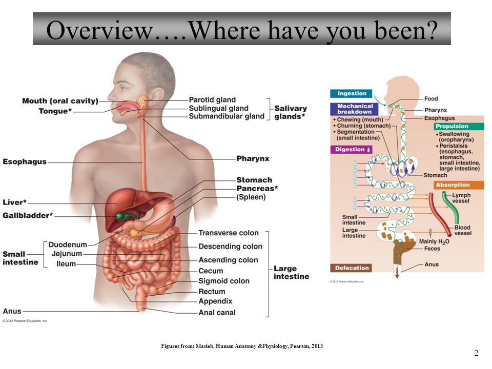 Anatomy and physiology ppt download anatomy and physiology 2 overview ccuart Gallery