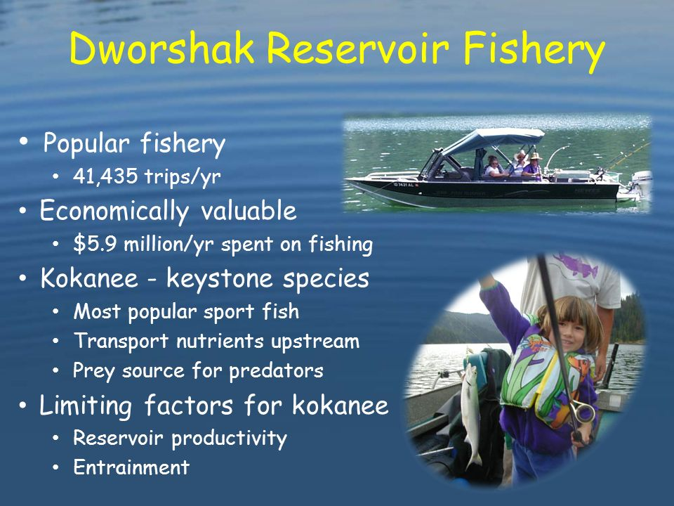 Dworshak dam resident fish mitigation project ppt video for Dworshak reservoir fishing