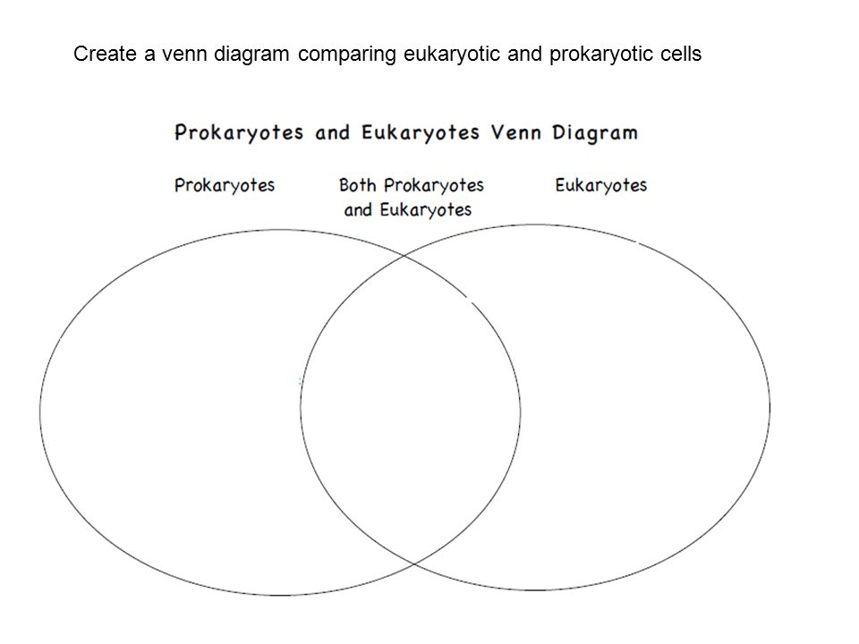 prokaryotic and eukaryotic venn diagram