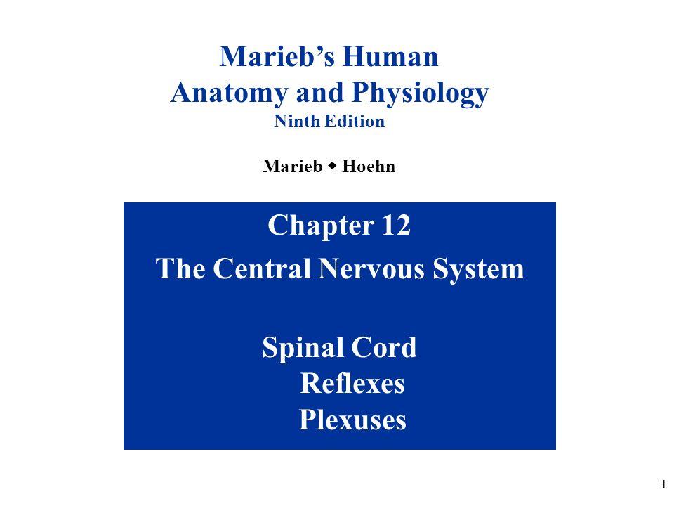 human anatomy physiology pdf marieb