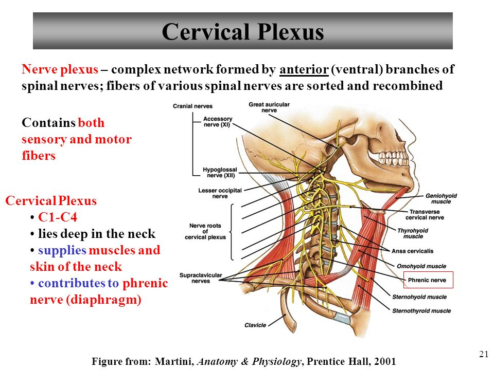 Anatomy and Physiology - ppt video - 118.0KB