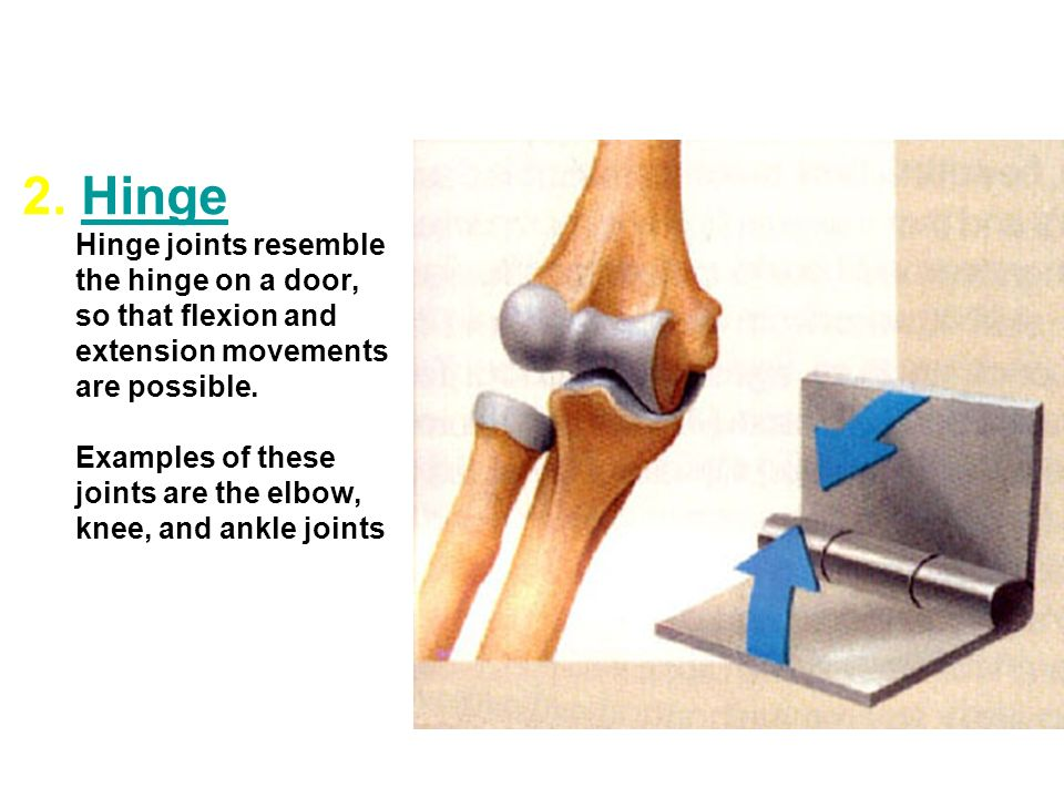 What is a joint? The Joints - ppt video online download Hinge Joint Knee