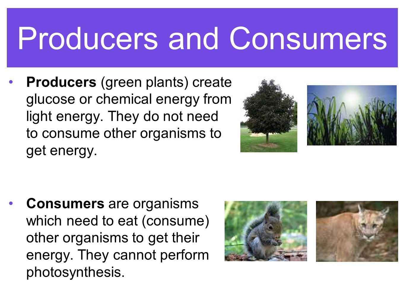 Energy Flow- Photosynthesis & Cellular Respiration - ppt ...