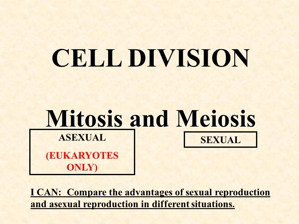The asexual cell division process is called