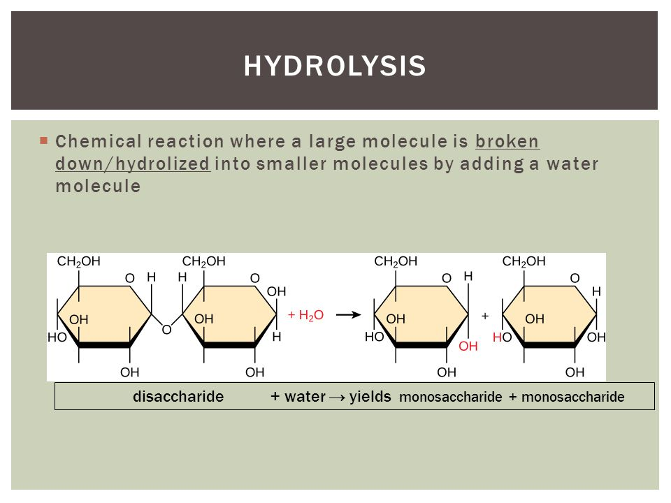 dehydration and hydrolysis relationship marketing