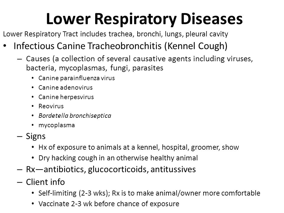 Adult tracheal disorders cough