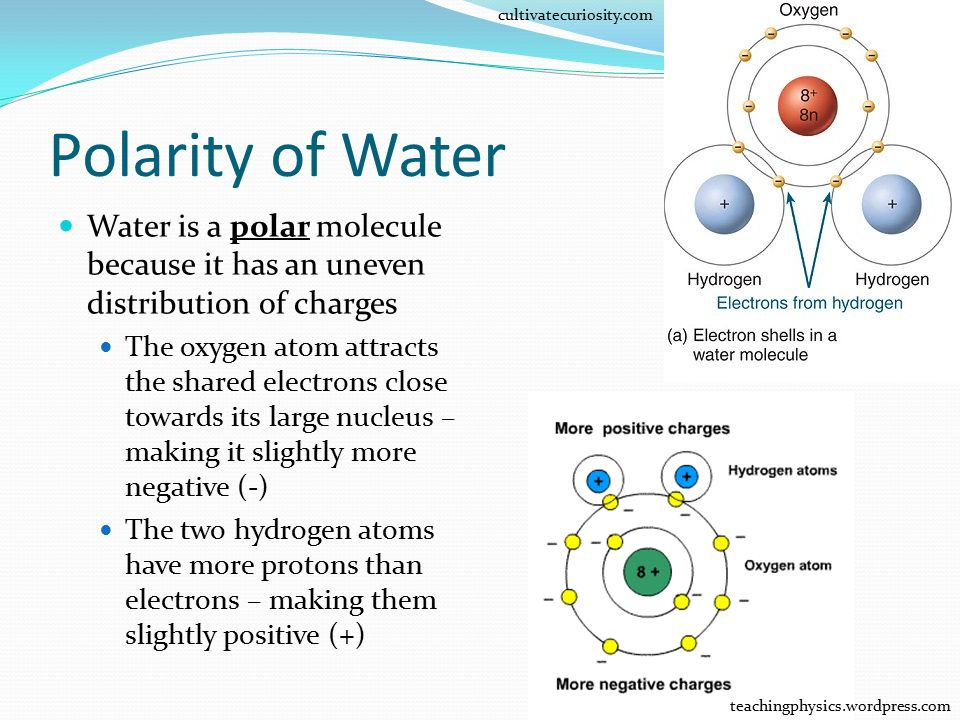 cultivatecuriosity.com Polarity of Water. Water is a polar molecule because it has an uneven distribution of charges.