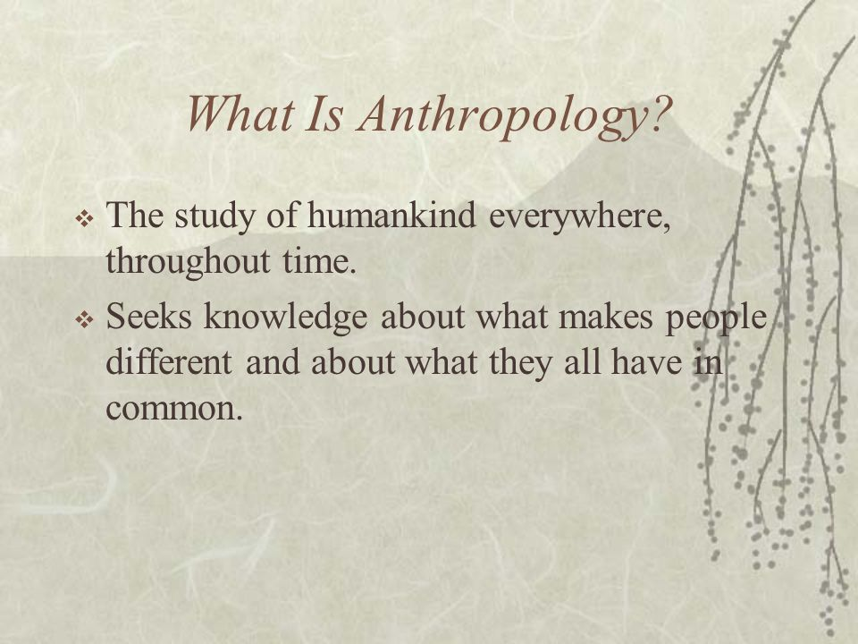 How do anthropologists study culture