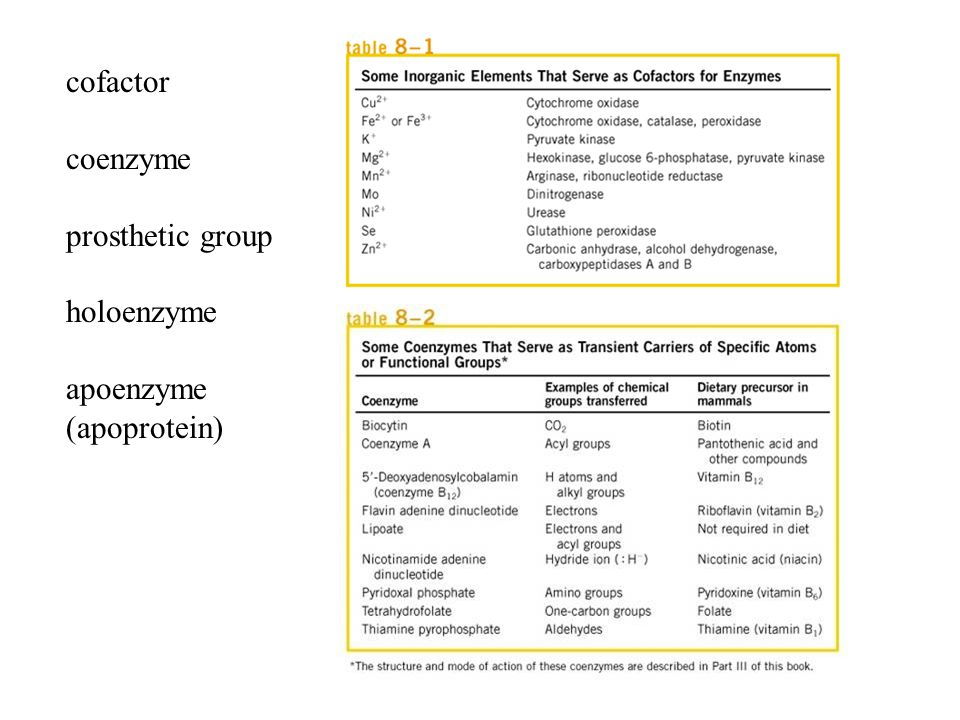 a study on enzymes The economic and financial analysis study for the jute / kenaf pulp manufacturing biotechnological application of enzymes for making paper pulp from green jute / kenaf.