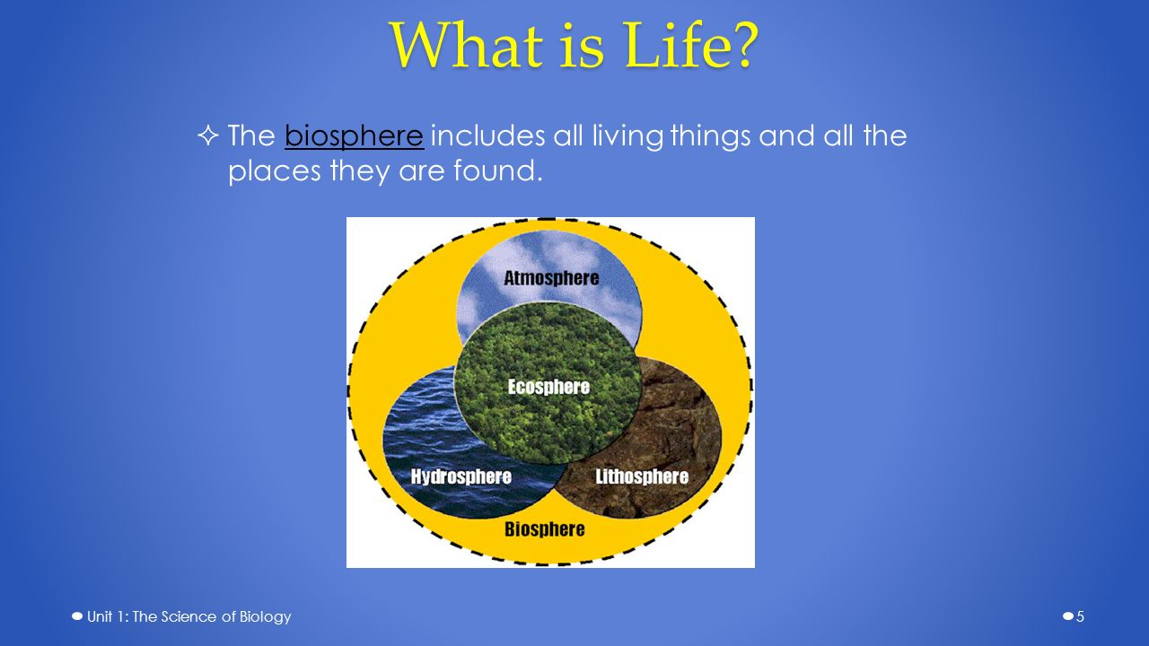 the study of the biosphere Biology the biosphere study guide if you are searched for a ebook biology the biosphere study guide in pdf format, in that case you come on to the.