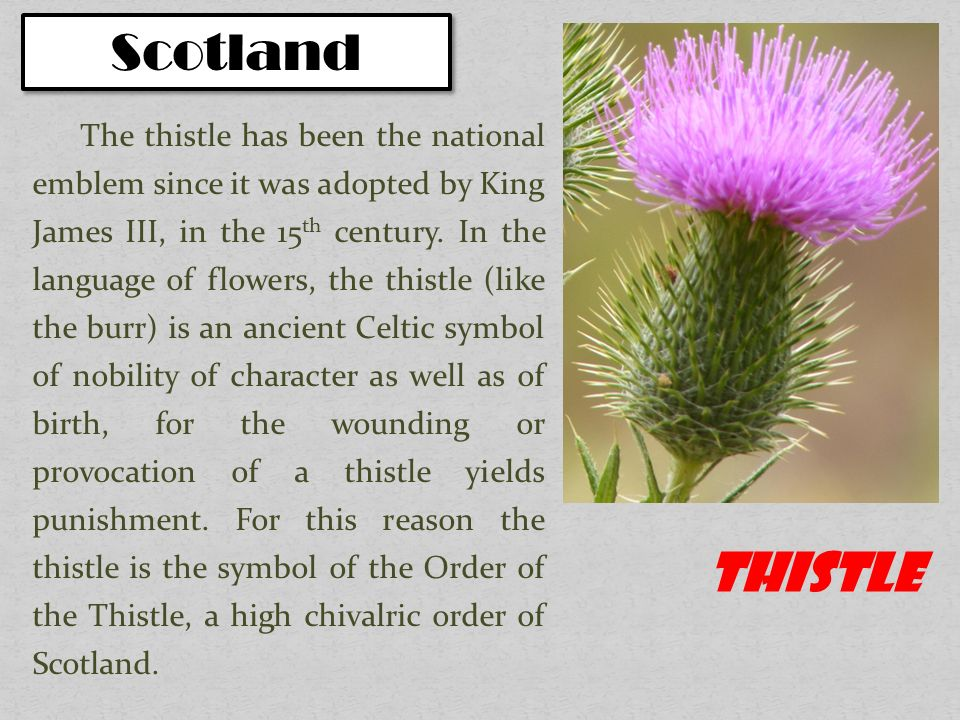 National Symbols Of The Uk Plants Ppt Video Online Download