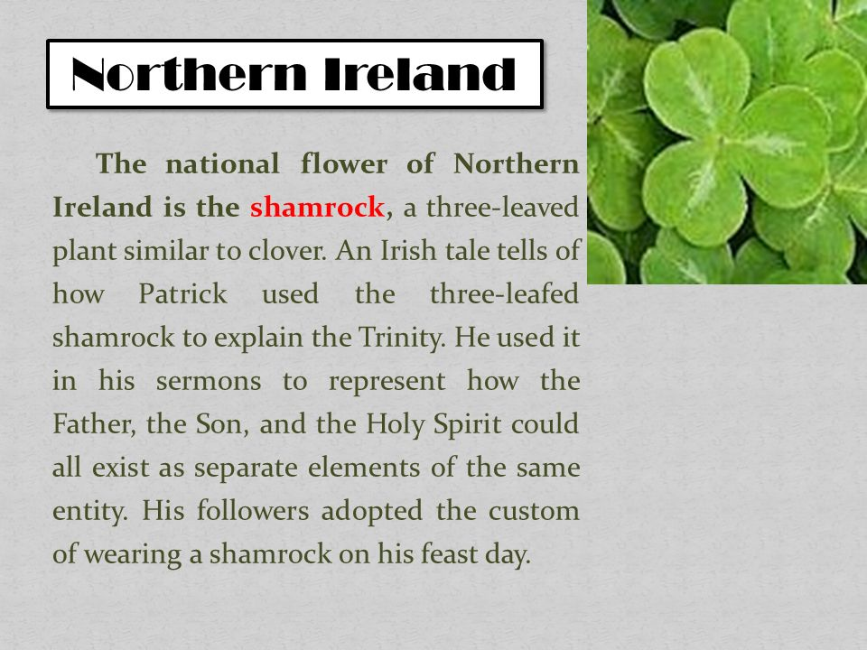 National symbols of the uk plants ppt video online download northern ireland mightylinksfo Image collections
