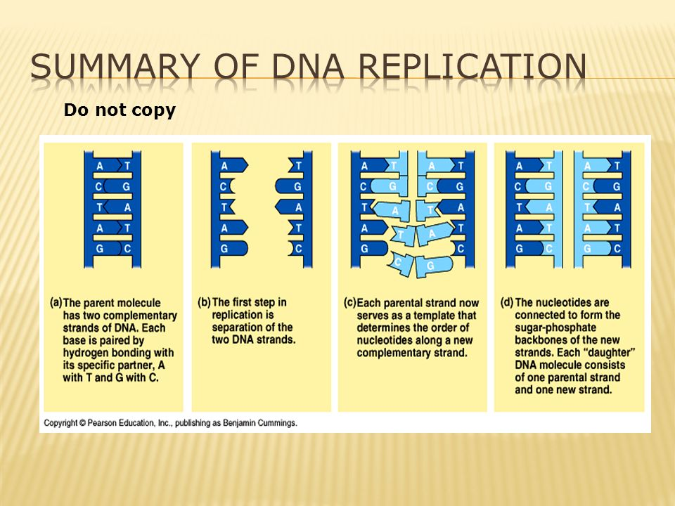 DNA Summary