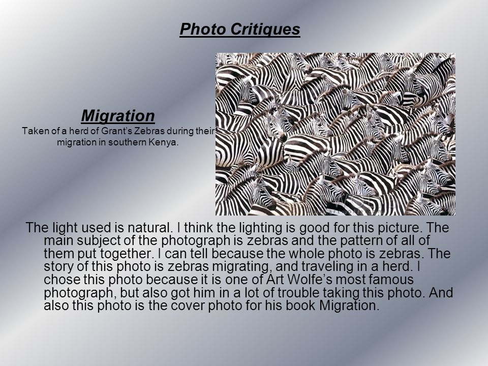 Photo Critiques Migration Taken of a herd of Grant's Zebras during their migration in southern Kenya.
