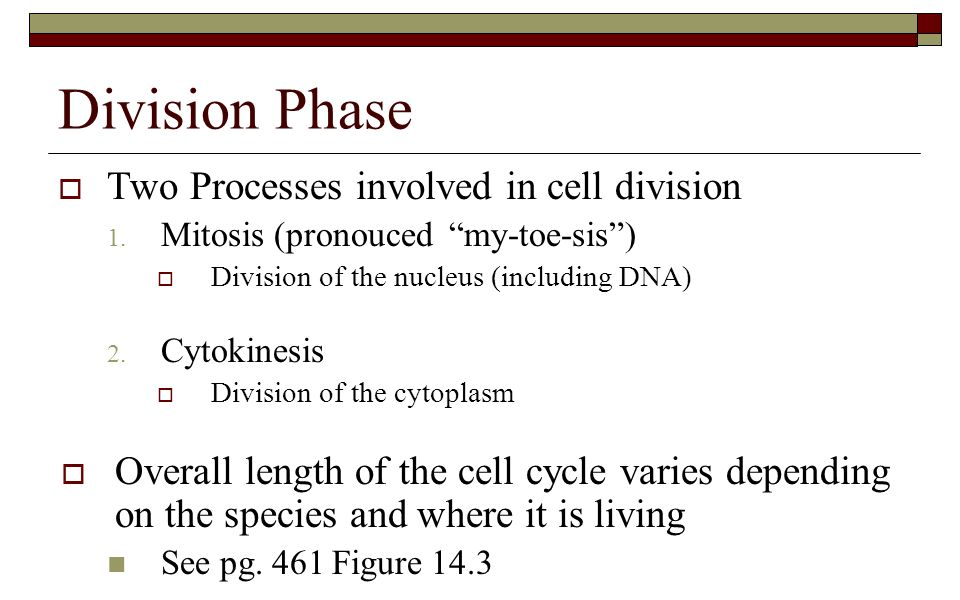 an overview of the processes of mitosis and cytoplasmic cell division Mitosis occurs in two general stages: division of the nucleus and division of the  cytoplasm before mitosis begins, the cell replicates its dna, making two copies.